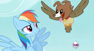 Rainbow Dash and Owlnona