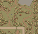 The Wooded Forest