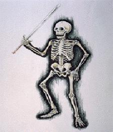 File:NM2DBSkeleton.png