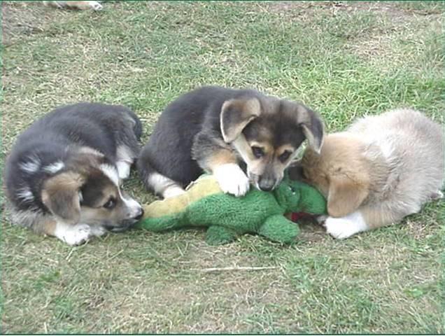 File:Dogsattackgator-1-.jpg