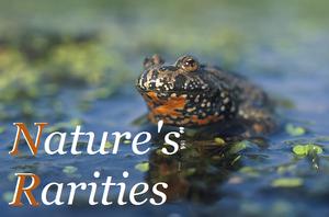 Nature's rarities