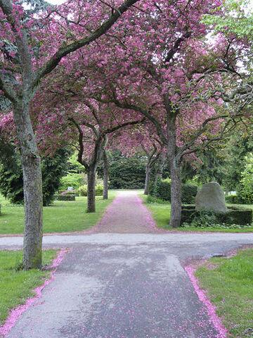 File:Lovia - Hightech Valley - George Washington Park 450px-Cherry trees at Assistens Kirkegaard.jpg