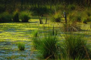 Mellon Wetlands 2