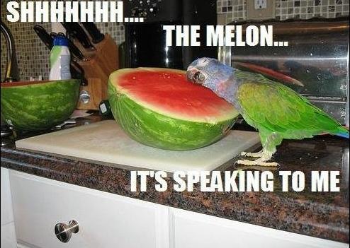 File:Melon.jpg