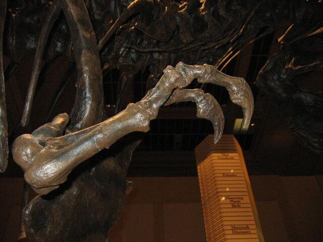 File:Tyrannosaurus (arm).jpg