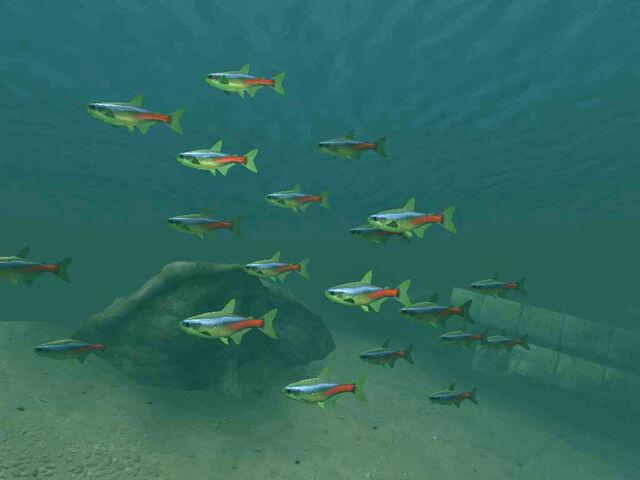 File:Nehrim Fish01.jpg
