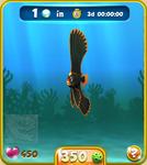 Orange Dusky Batfish