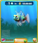 Grey Mandarinfish