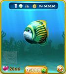 Green Emperor Angelfish