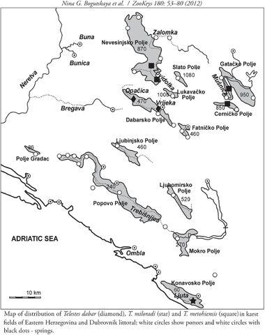 File:Gaovica (Telestes dabar i T. miloradi - ranije kao T. metohiensis) novi endemi, Nevesinjsko, Dabarsko i Cernicko Polje u BiH i Konavli-Ljuta u HR.jpg