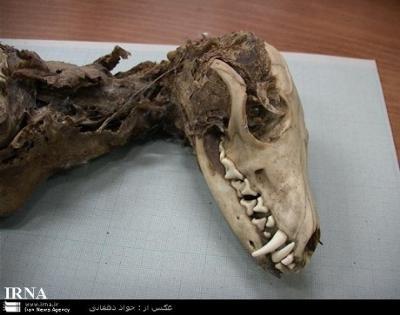 File:400px-Iran.jpg