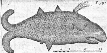 File:Oxypterus.jpg