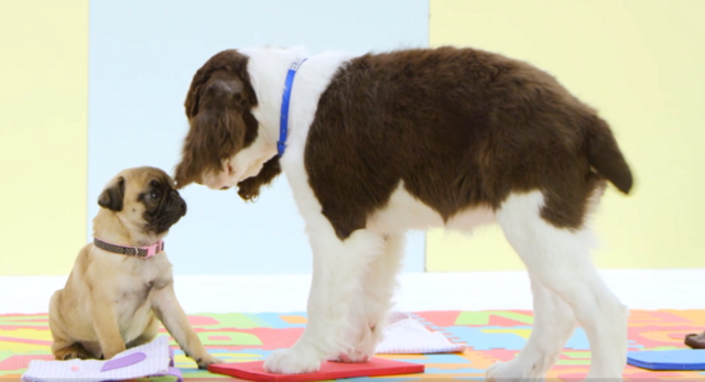 File:Nick Jr. Puppies Pete and Stella - Best Friends.png