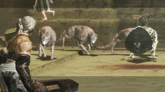 File:Desert Wolves.jpg