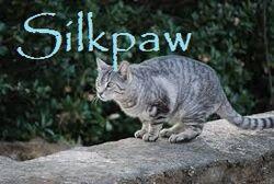 Silkpaw