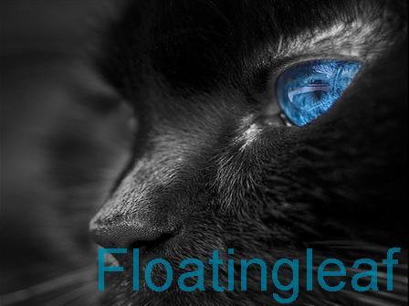 File:Floatingleaf.jpg