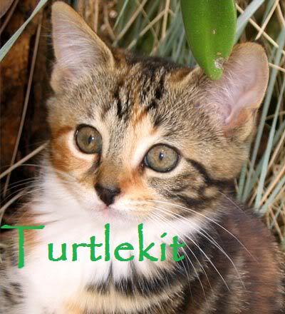 File:Turtlekit.jpg