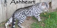 Ashheart