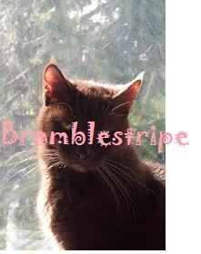 Bramblestripe