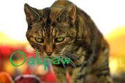 Oakpaw
