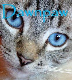 Dawnpaw