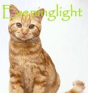 Eveninglight