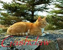 Gashclaw