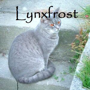 Lynxfrost