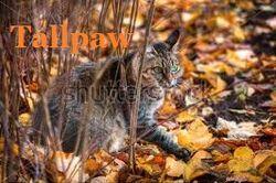 Tallpaw