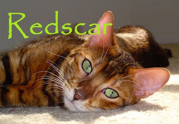 File:Redscar.jpg