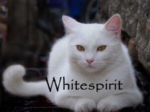 Whitespirit