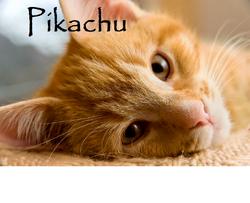 PikachuKittypet