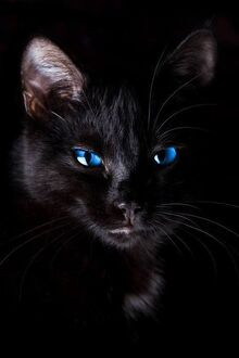Cat-with-blue-eyes-familiars-the-black-cat-pinterest-black-cats