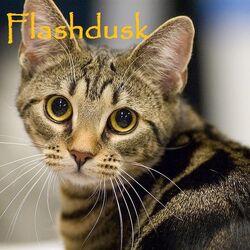 Flashdusk