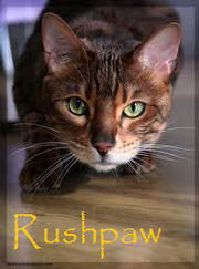 Rushpaw