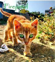 Firepetal