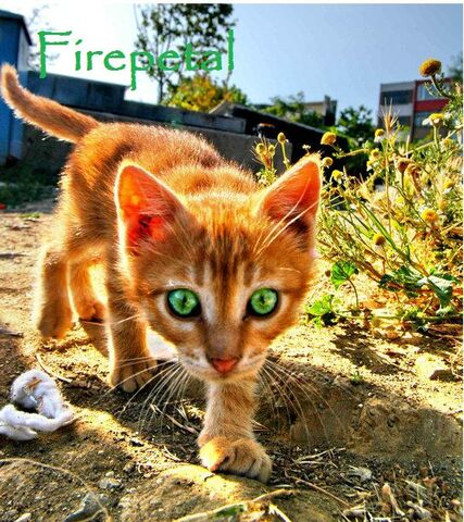 File:Firepetal.jpg