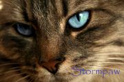 Stormpaw.AS