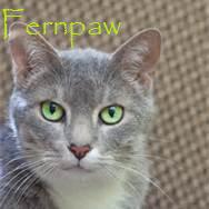 Fepaw