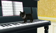 Cat Walking On Keys
