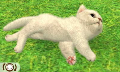 File:White Persian.JPG
