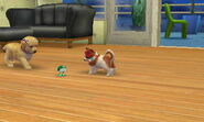 Nintendogs Cats 004