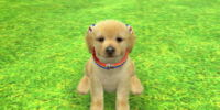 Trick (Nintendogs + Cats)