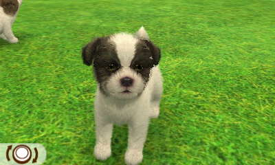 File:Black malteese.JPG