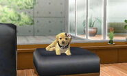 Nintendogs Cats 035