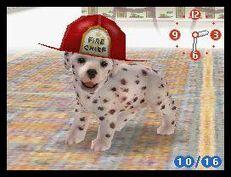 Dalmatian wearing fireman's hat