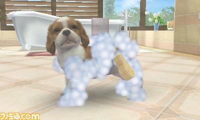 File:Dog-Bath-1-.jpg