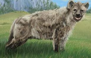 File:Rabid Hyena.jpg