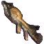 Froghead Fish