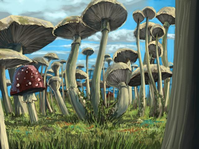 File:Fungi Forest-Main.jpg